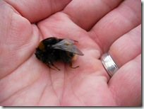 Large London Bumble Bee